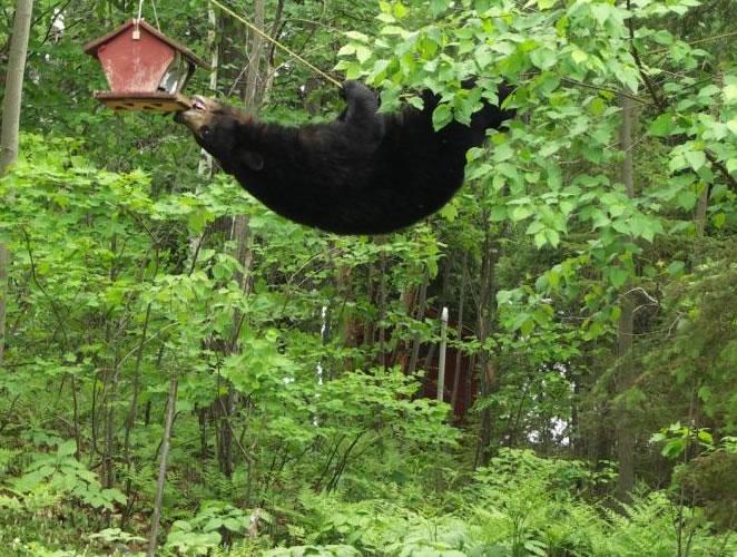 The 5 Most Stunning Photos of Wildlife Captured on Bird Feeding Stations