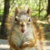 The 3 Best Squirrel Proof Bird Feeders to Buy in 2017